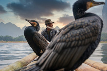 A Fisherman And His Cormorants On A Raft In Sunset