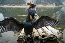 A Black Cormorant Standing In Front Of A Fisherman