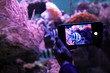 canvas print picture - Woman taking photo of aquarium with fish, closeup