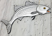 Wooden Striped Bass Mounted On...