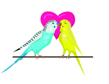 Two Budgie Birds Are Kissing, ...
