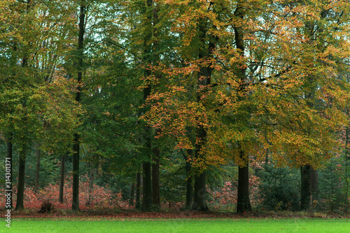 Meadow on the edge of an autumn forest. © ysbrandcosijn