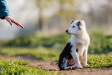 Mixed-breed Puppy Gets A Hand ...
