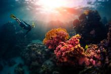Woman Freediver Swims Underwat...