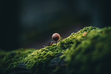 Kleiner Pilz Auf Moos