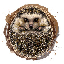 Hedgehog. Artistic, Drawn, Color Portrait Of A Hedgehog In Watercolor Style On A White Background.