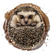 Hedgehog. Artistic, Drawn, Col...