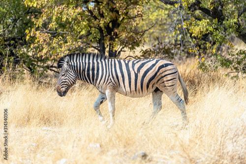 Namibia, Africa. Etosha Canvas Print