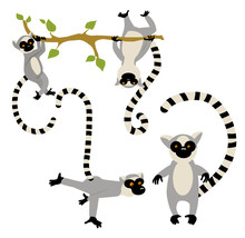 St Of Cartoon Lemurs On The Wh...