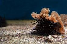 Sea Urchin And Coral Macro