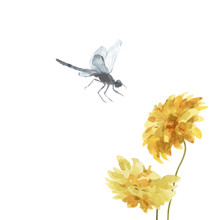 Watercolor Dragonfly And Yellow Flowers Isolated On White.