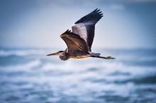 Bird Flying On The Beach