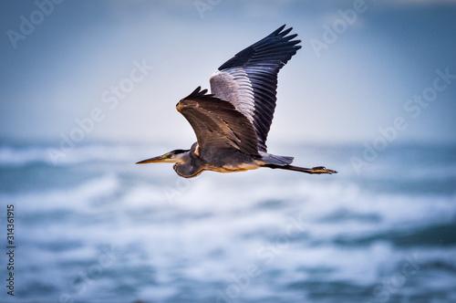 Photo Bird flying on the beach