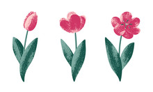 Vector Hand Drawn Tulip Flower...
