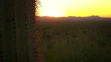 Saguaro National Park, Spines ...
