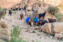 Goats And A Donkey In Wadi Dana Canyon In Dana Biosphere Reserve, Jordan