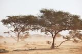 Fototapeta Landscape - African landscapes