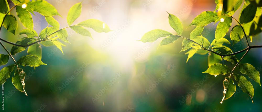 Fototapeta fresh green leaves in spring and bokeh background
