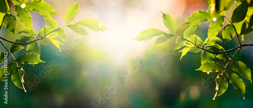Obraz fresh green leaves in spring and bokeh background - fototapety do salonu