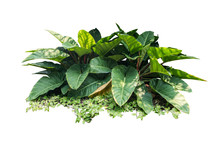 Jungle Leave Plant Isolated Include Clipping Path On White Background