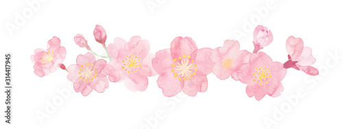 Watercolor illustration of cherry blossoms painted by hand Canvas-taulu