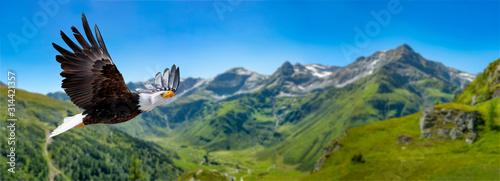 Cuadros en Lienzo Adler fliegt in großer Höhe mit ausgebreiteten Flügeln an einem sonnigen Tag in den Bergen