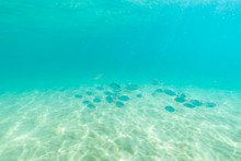 Group Of Fish Swim In The Clea...