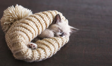 Kitten Sleep In Knitted Hat