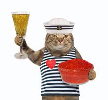 The Cat Dressed In Sailor Clot...