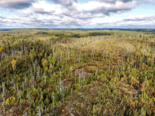Valokuva  Aerial view of Karelian hilly forest near Ladoga lake in autumn
