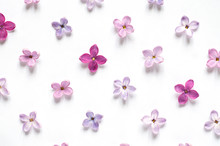 Rows Of Many Small Purple And Pink Lilac Flowers On White Background