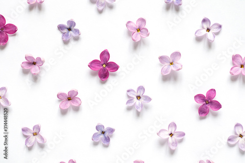 Valokuva Rows of many small purple and pink lilac flowers on white background