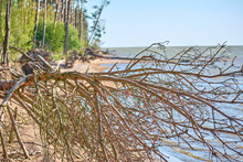 Seascape. Tree Branches And Ro...