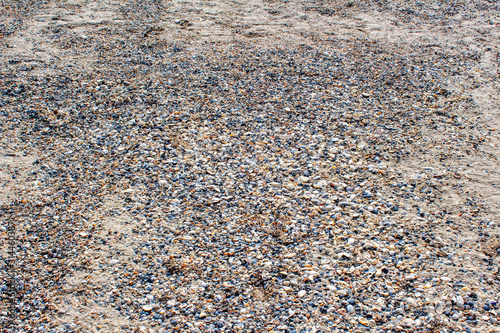 Valokuvatapetti beach surface with shells in the summer