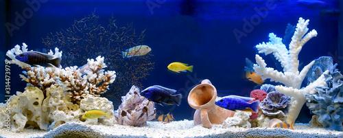 Akwarium słodkowodne w stylu pseudo-morskim. Aquascape i aquadesign.