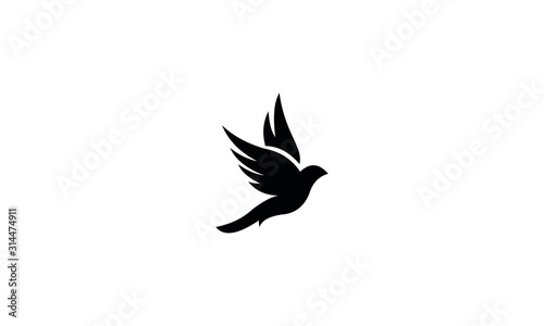 Fototapeta silhouette of bird obraz