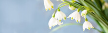 Spring Background Banner . Sno...