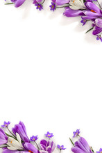 Spring Decoration. Frame Of Violet And White Crocuses And Flowers Hepatica ( Liverleaf Or Liverwort ) On A White Background With Space For Text. Top View, Flat Lay