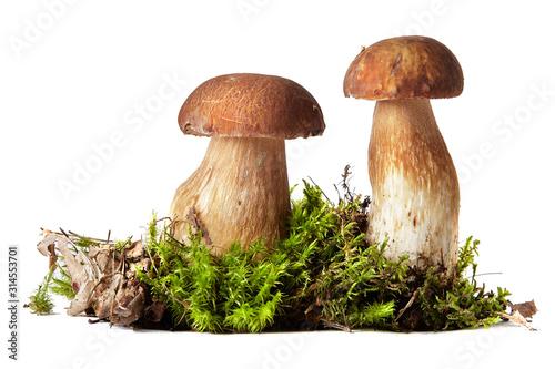 Fototapeta Fresh ceps on moss isolated on white obraz
