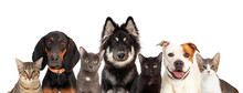 Cats And Dogs Together White W...