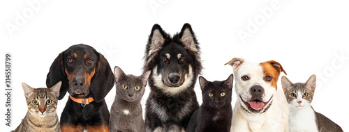 Cats and Dogs Together White Web Banner Canvas Print