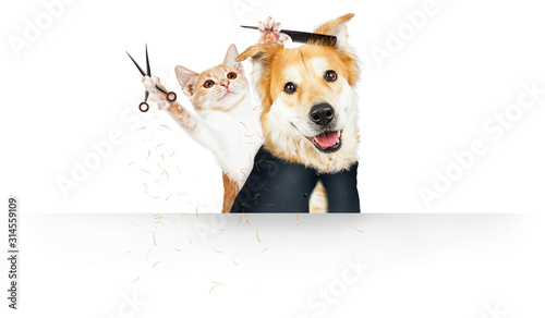 Fotomural Funny Cat Grooming Dog Web Banner