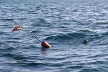 Buoys For Lobster Pot Near The...