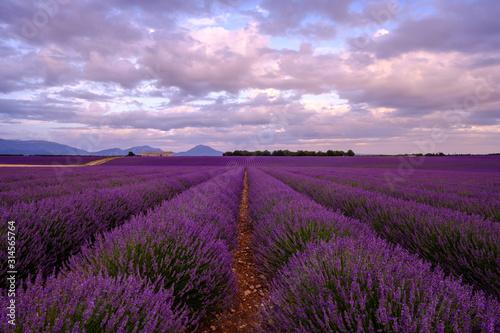 Fototapeta Champ de lavande en Provence. Coucher de soleil, ciel nuageux, coloré.  obraz na płótnie
