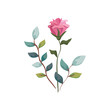 cute flower with branches and leafs isolated icon vector illustration design