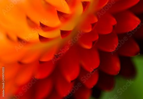 Fototapeta flower on isolated background obraz