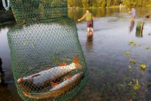 Fishing On The Drava River