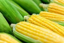 Fresh Ripe Corn In Street Market, Close-up. Peeled Ears Of Sweet Corn With Yellow Grains. Organic Food.