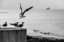 Flying Gull With Three Gulls Sitting On A Column With The Sea And Boats On The Background