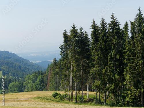Photo Mischwaldlandschaft mit hohen Weißtannen (Abies alba) im Schwarzwald